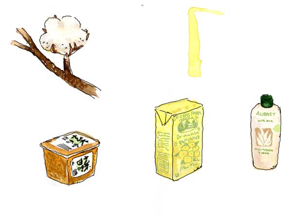 600px-綿の花と味噌